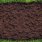 What is Sod?